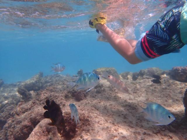 新城海岸 シュノーケリング 熱帯魚